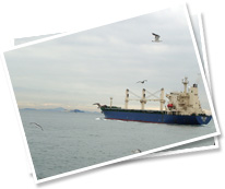 Logistics Consultants, Marine Consultants and Shipping logistics